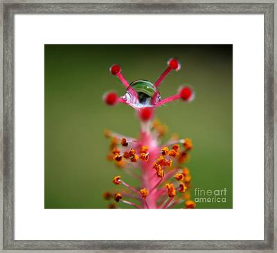 Eye Framed Print by Michelle Meenawong