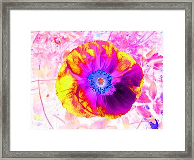 Fervor And Passion Flower 2 Framed Print by Kenneth James