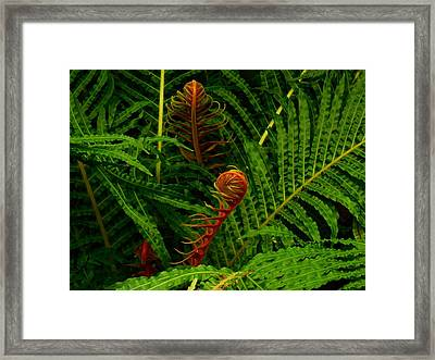 Fiddlehead Fern Fronds Framed Print by Movie Poster Prints
