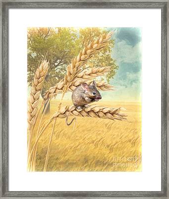 Field Mouse Framed Print