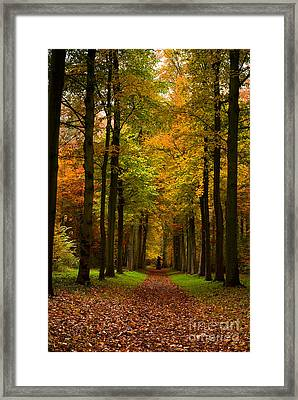 Framed Print featuring the photograph  Footpath Carpet by Boon Mee
