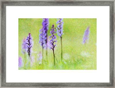 Fragrant Orchids Framed Print