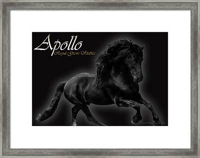 Friesian Stallion Framed Print by Royal Grove Fine Art