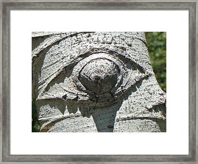 Gecko Eye Framed Print by Deborah Moen