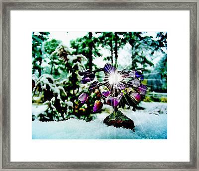 Gem Tree In Snow Framed Print by Rick Todaro