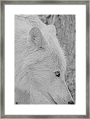 Framed Print featuring the drawing  Gentle Arctic Wolf  by Debra     Vatalaro