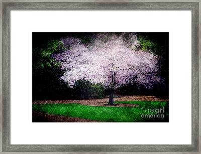 Ghostly Spring Framed Print by Bobbi Feasel