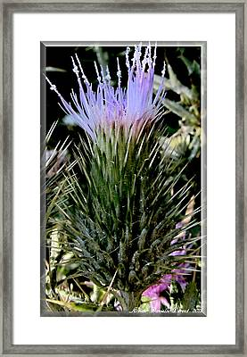 Glowing Purple Thisle Flower Framed Print