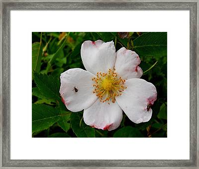 Framed Print featuring the photograph  Going Hiking by Yolanda Raker