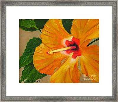 Golden Glow - Hibiscus Flower Framed Print