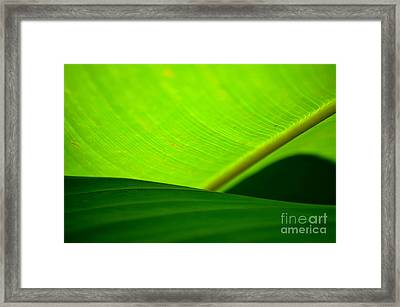 Greens Framed Print by Michelle Meenawong