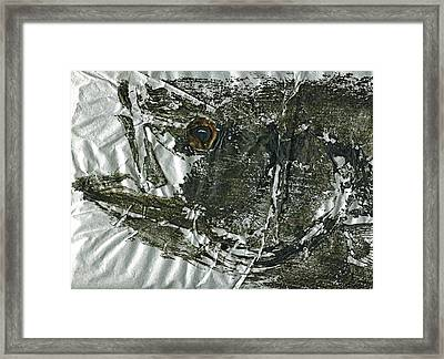 Gyotaku - Striped Bass - Striper Chase Framed Print