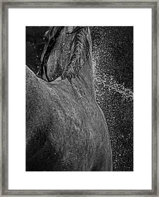 Horse Cool Off Framed Print