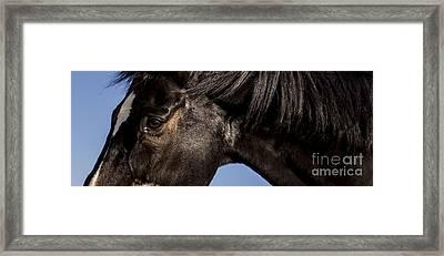 Horse - Dark Bay I Framed Print by Holly Martin