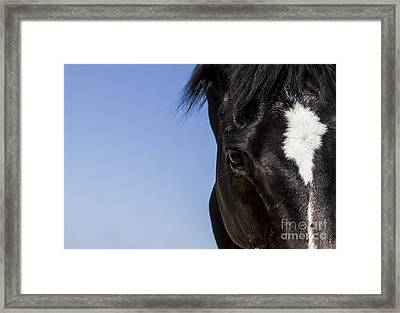 Horse - Dark Bay II Framed Print by Holly Martin