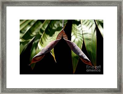 Husk Framed Print by Michelle Meenawong