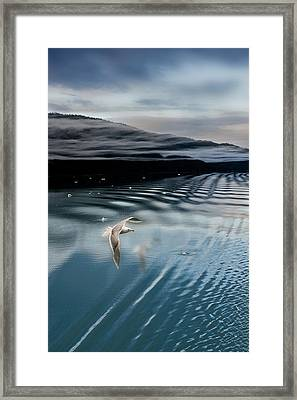 Journey With A Sea Gull Framed Print