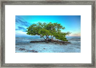 Key West Solitary Existence Framed Print