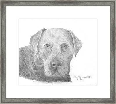 Labrador Retriever Black Framed Print by Jim Hubbard