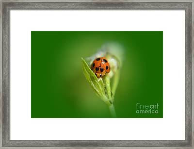 Ladybug Framed Print by Michelle Meenawong