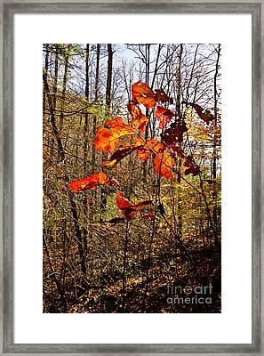 Leaves Of Fall Framed Print