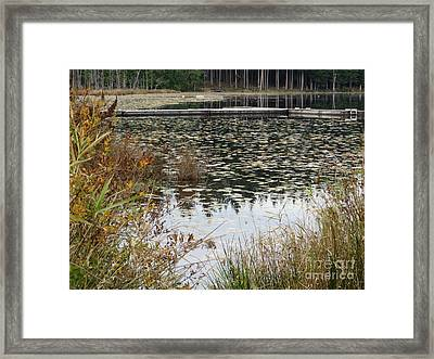 Lily Pads On Whonnock Lake Framed Print