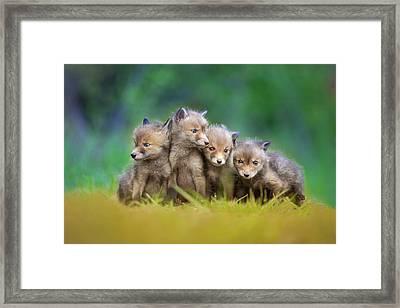 ... Little Explorers ... Framed Print