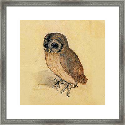 Little Owl Framed Print by Albrecht Durer