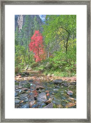 Framed Print featuring the photograph  Lone Maple Fall Creek by Harold Rau