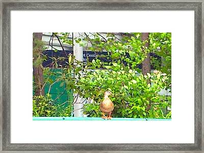 Look At Me Framed Print by Amazing Photographs AKA Christian Wilson