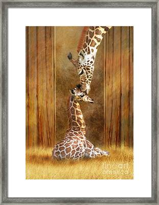 Love ...... Framed Print