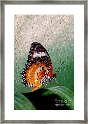 Malay Lacewing Butterfly II Framed Print
