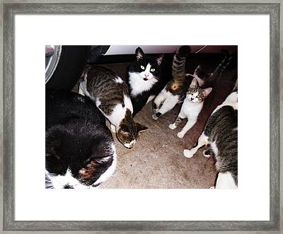 Mama Cat And Kittens Framed Print by Trudy Brodkin Storace