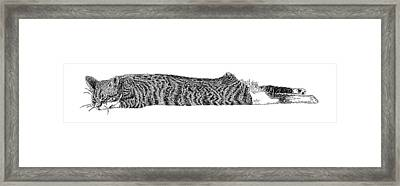 Skippy The Manx Cat Sleeping Framed Print