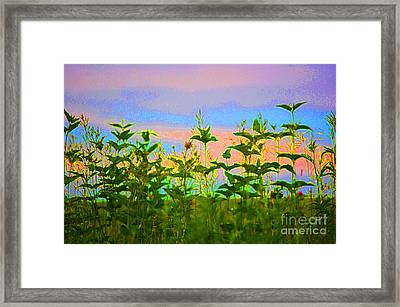Meadow Magic Framed Print