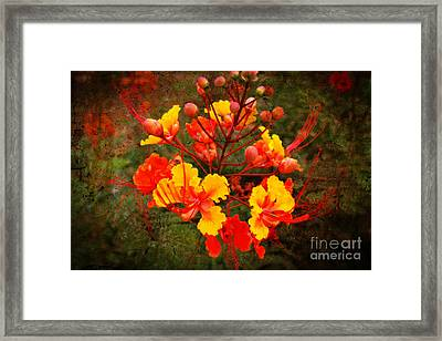 Mexican Red Bird Of Paradise Framed Print by Beverly Guilliams