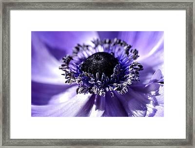 Mona Lisa Poppy Anemone Framed Print by Julie Palencia