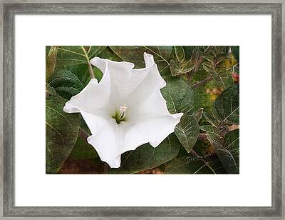 Moonflower Framed Print by Terri Harper