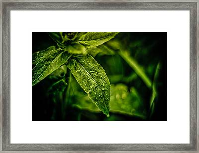Framed Print featuring the photograph  Morning Dew by Jason Naudi Photography