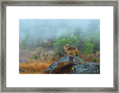 '' Morning Patrol '' Framed Print