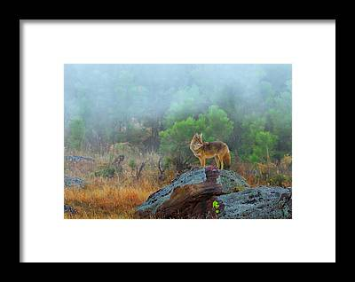 The Great Smoky Mountains Framed Prints