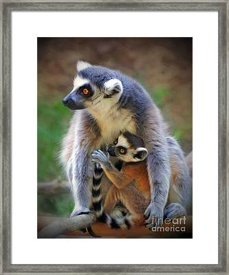 Framed Print featuring the photograph    Mother And Baby Monkey by Savannah Gibbs
