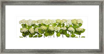 Mourning White And Green Flowers Line Isolated Framed Print