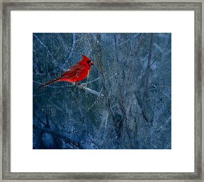 Northern Cardinal Framed Print by Thomas Young
