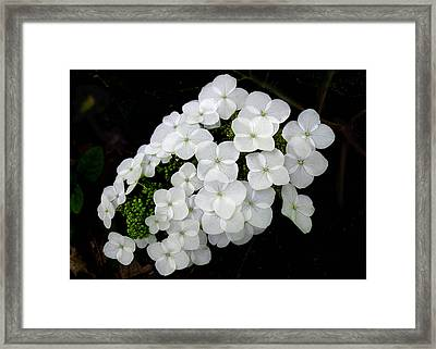 Framed Print featuring the photograph  Oak Leaf Hydrangea by William Tanneberger