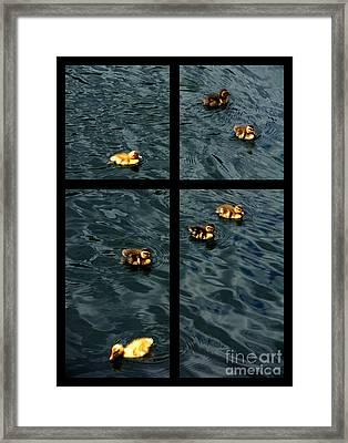 On Golden Duck Pond Framed Print