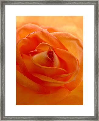Orange Swirls Rose Flower Framed Print by Jennie Marie Schell
