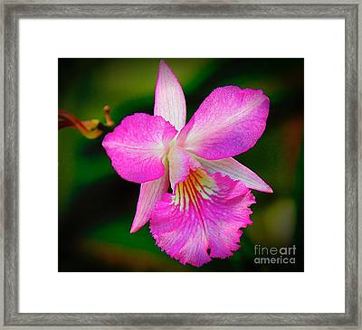 Orchid Flower Framed Print