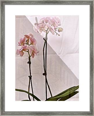 Framed Print featuring the photograph  Orchids In The Window by Ira Shander