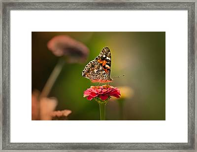 Painted Lady Summer Profile Framed Print by Sylvia J Zarco